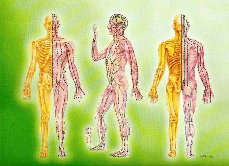 энергетические причины болезней меридианы