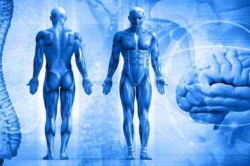 12 систем организма человека - единый принцип целесообразности