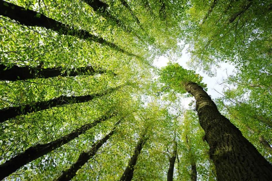 энергетика деревьев титул