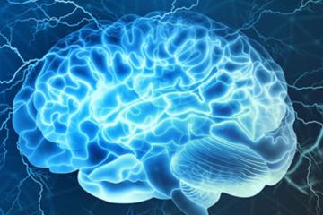пластичность мозга