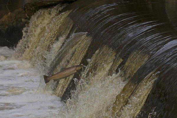 питьевая чистая вода форель