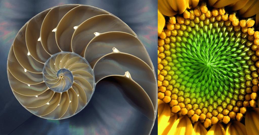 сакральная геометрия в природе